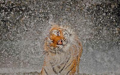 الصور الفائزة في مسابقة ناشيونال جيوغرافيك 2012