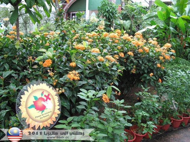 حديقة الفراشات بينانج