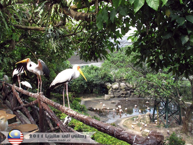 حديقة الطيور