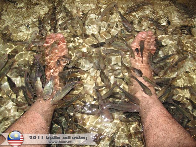 مساج السمك