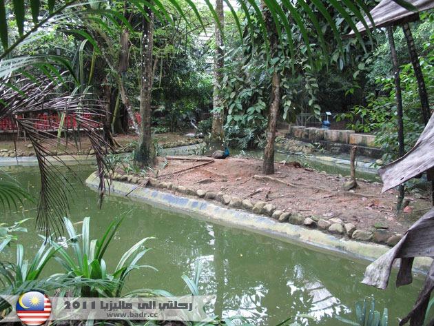 حديقة لنكاوي للطيور